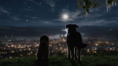 Lady and the Tramp get live action makeover for Disney+