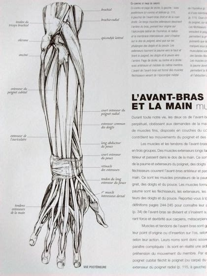 Explication muscles bras corps-humain   Dessin anatomie