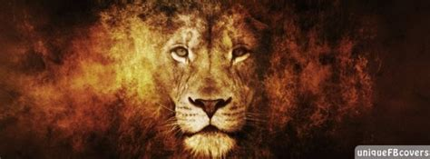 Lion Facebook Covers   Animales Fb Cover - Facebook Covers