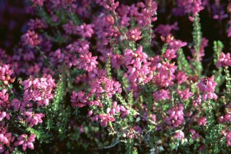 Home English Blog: The Language of Flowers