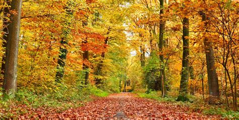 Autumnal Equinox 2019 - First Day of Fall Time and What It