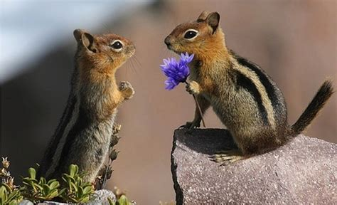 36 Beautiful Pictures That Prove Love Exists In The Animal
