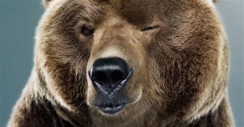 A cute grizzly bear :)   My brothers!   Pinterest   Bears